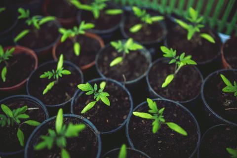 CPVO | Community Plant Variety Office